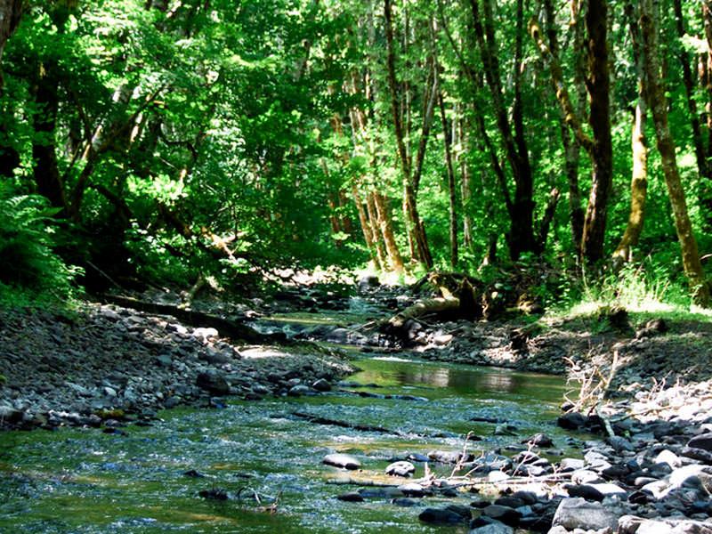 gales creek oregon map Gales Creek Campground Tillamook Forest Oregon gales creek oregon map