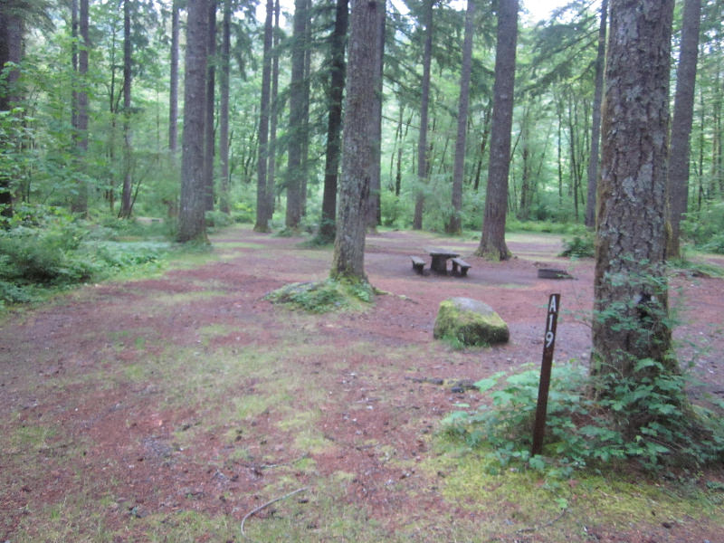 camp lake cougar women Do encounter a bear or cougar, notify park staff immediately  a female cougar  will defend her young  there are many things you can do in camp and on the.
