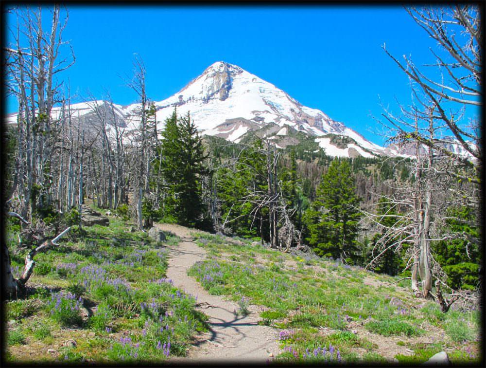 Tilly Jane Hiking Trail - Cooper Spur to Cloud Cap Inn, Mount Hood