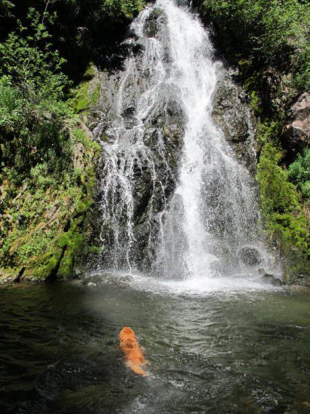 dog-swimming-sahale-falls