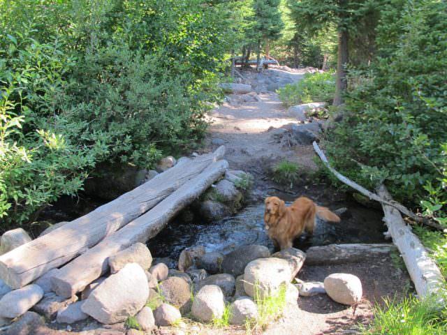 elk-meadows-hike (16)
