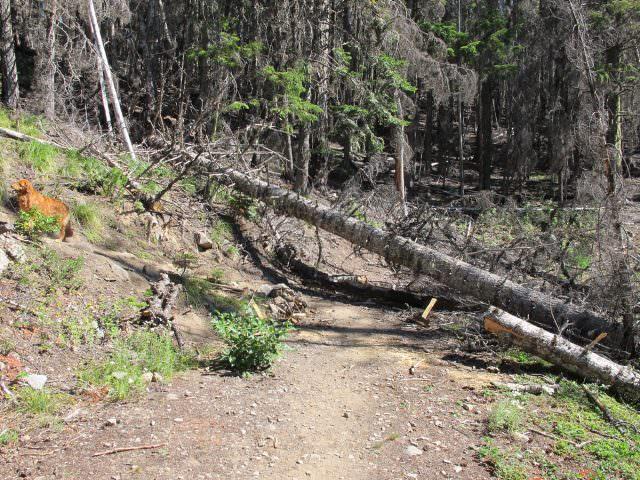 Trail Turnoff